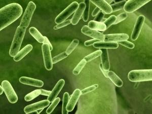 Probioticos Colon Irritable