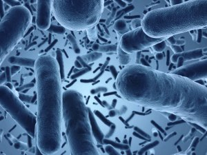 Bacterias probioticos en colon irritable