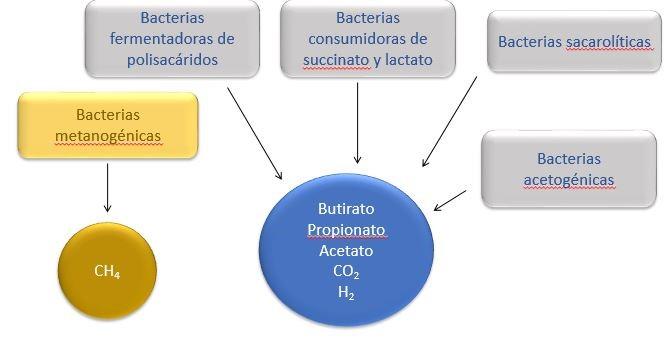 Bacterias - microbiota intestinal