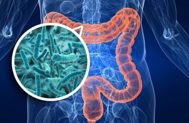 Probióticos y productos para colon irritable